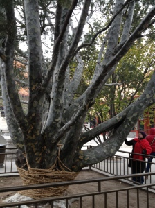 A tree in what remains of on eof the Emperor's Gardens