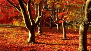 bodnant_trees_gillian_dromey