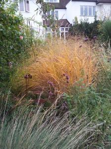 grasses 30 oct 11