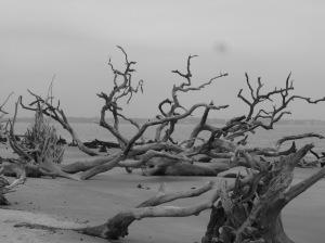 Jekyll-Driftwood-Beach