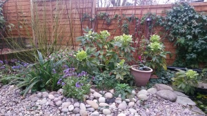 pulmonaria and hellebore front