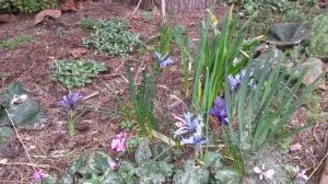 under the blue fir